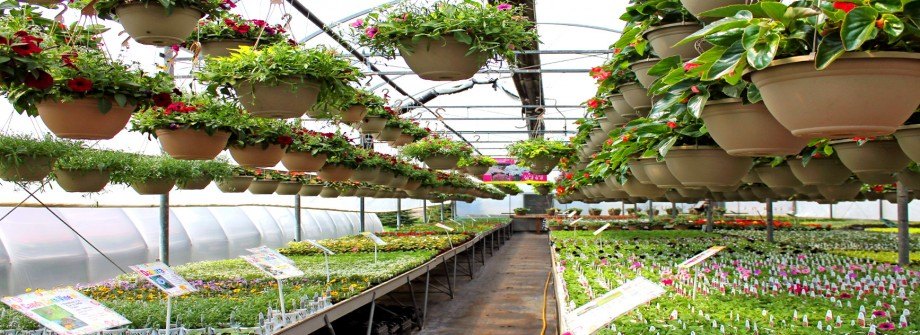 Planters Baskets & More