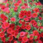 FlowerBed Greenhouses